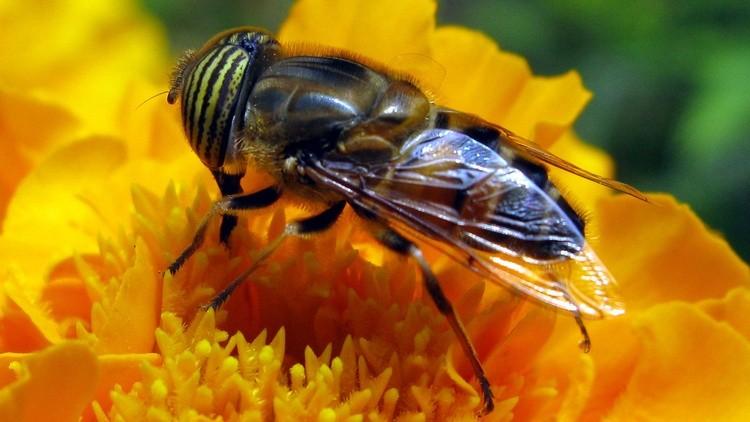 Bee203