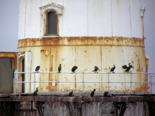 watchers of the lighthouse