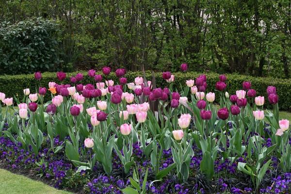 Spring in Regents Park