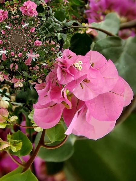 Pretty Pinks (One)