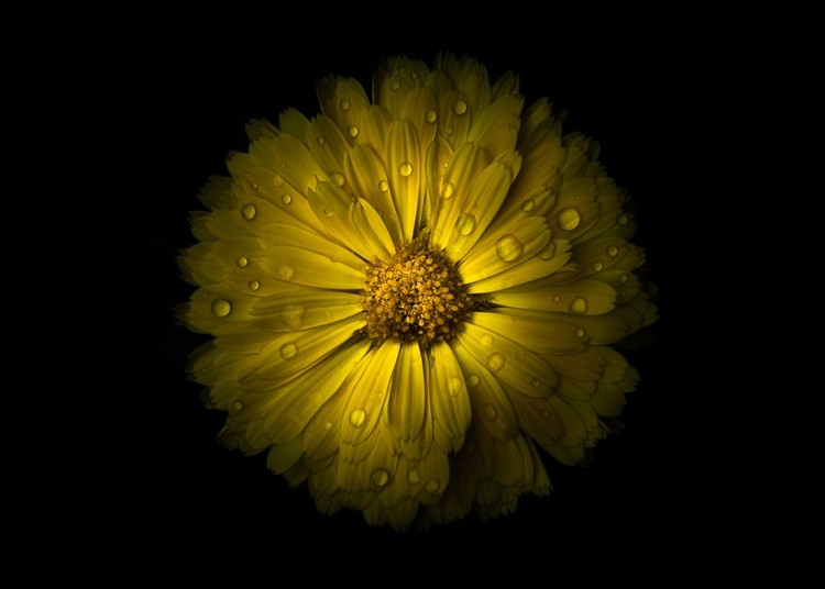 Backyard Flowers 10 Color Version