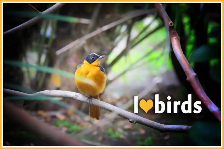 Karen Muro I LOVE BIRDS