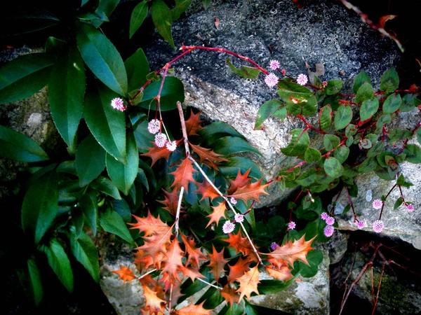 garden3ver1.jpg