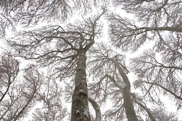 06_TreeSky
