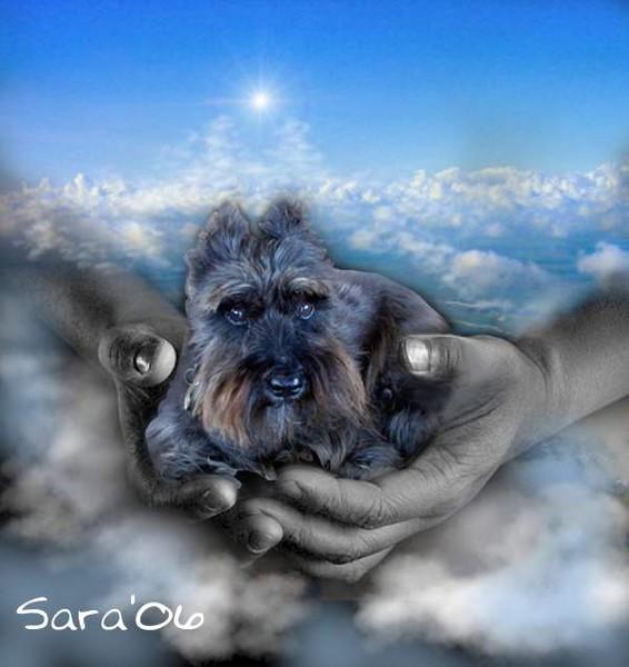 Fritz in Heaven