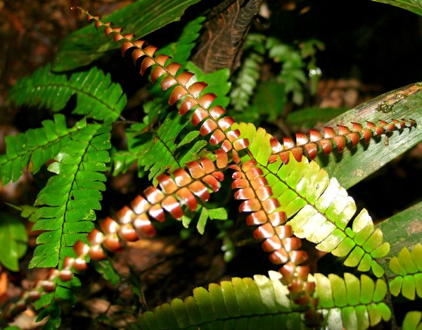 Ferns in Bronze and Green