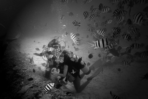 Diving in the Coral Gardens