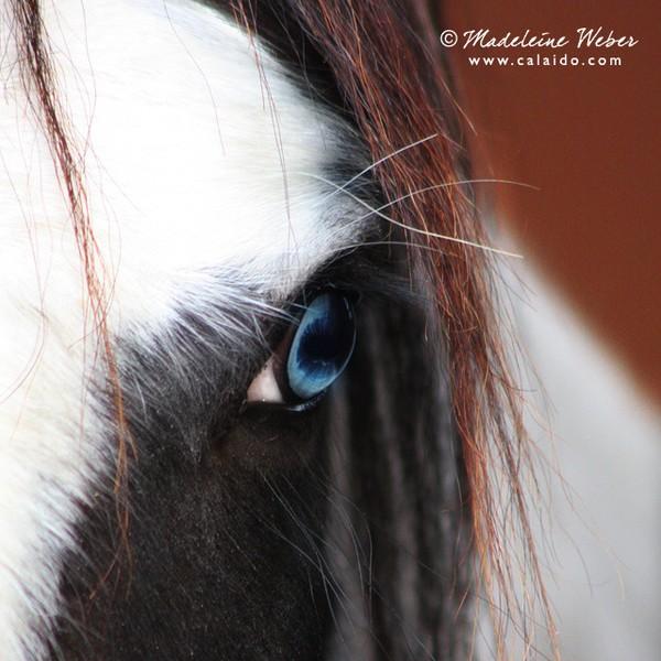 • Beautiful Eyes