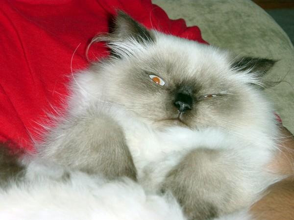 Squinty Himmy Kitten