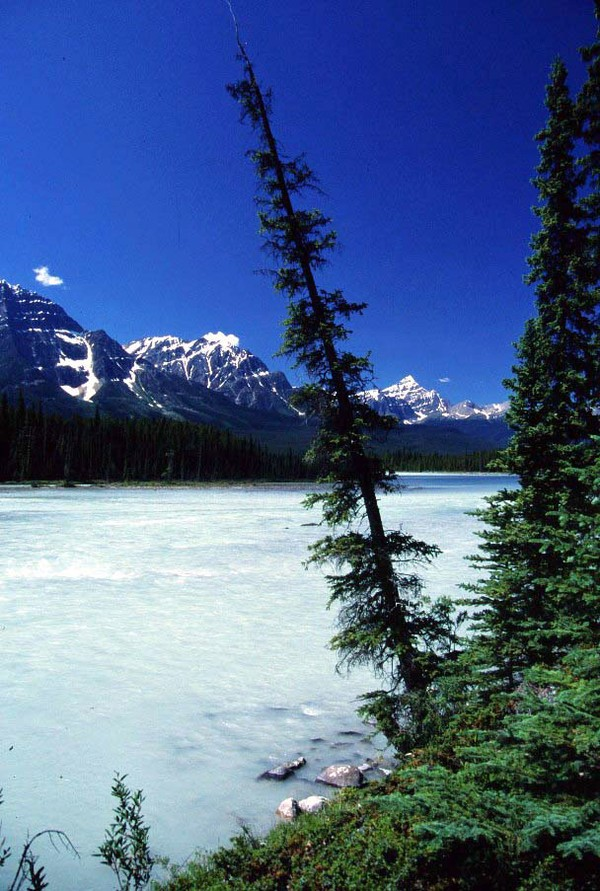 Athabasca River, Jasper National Park, Alberta