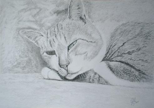 Cat 12