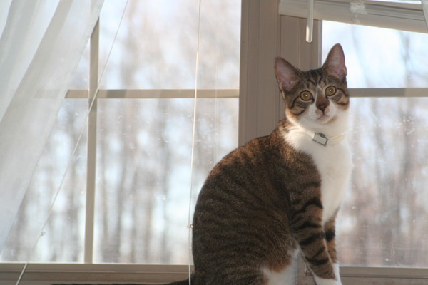 My girl friend cat