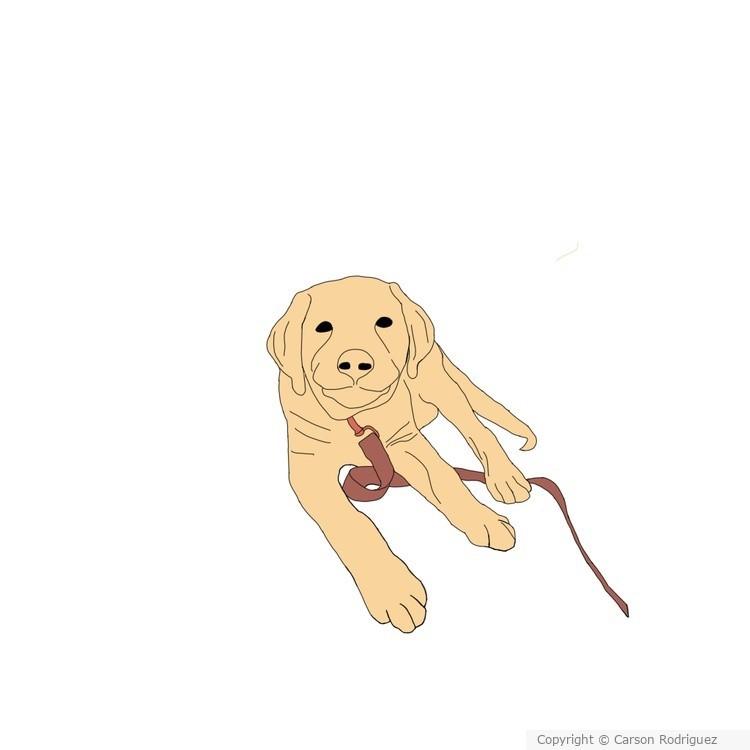 Look at this cute dog