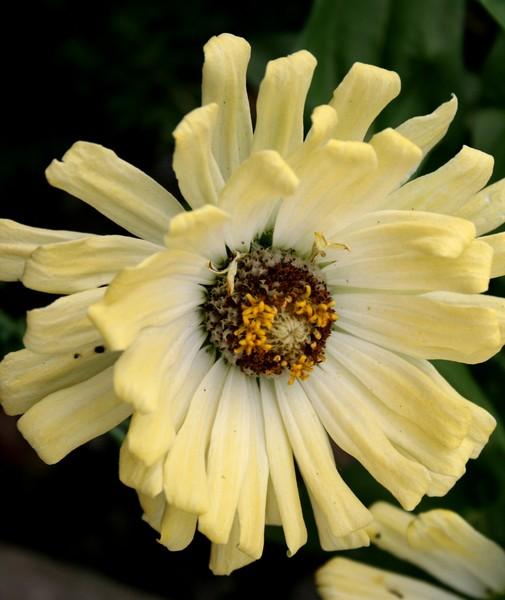 Sea Flowers - Ivory