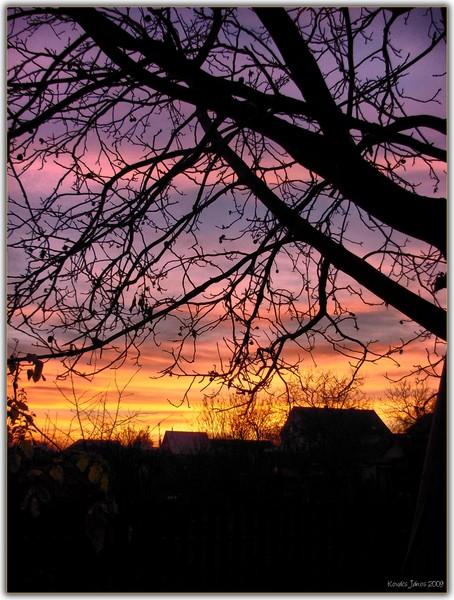 Sunset In My Garden XVI