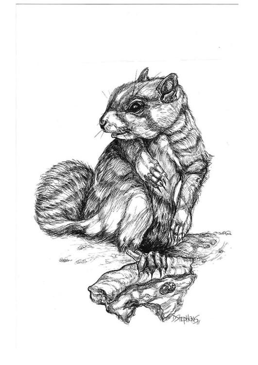 City Squirrel Pizza