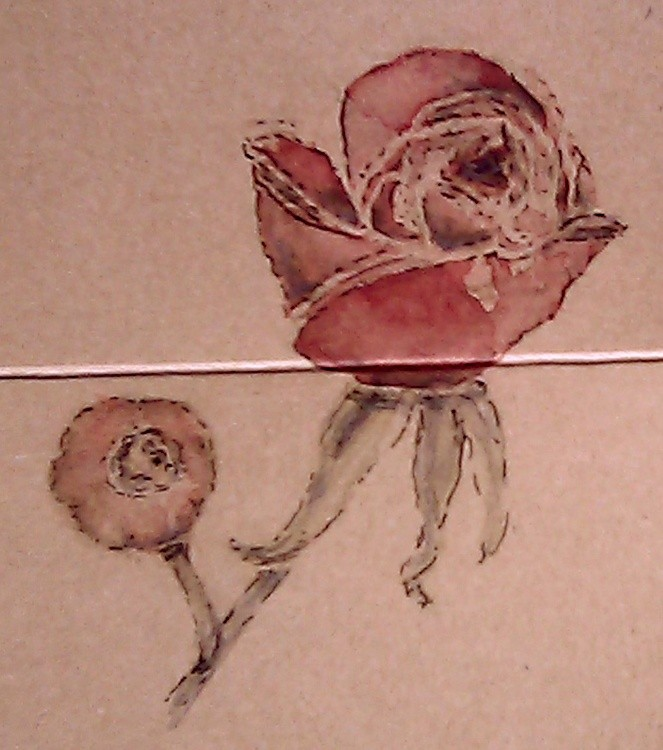 Rose and Rose Hip Watercolor