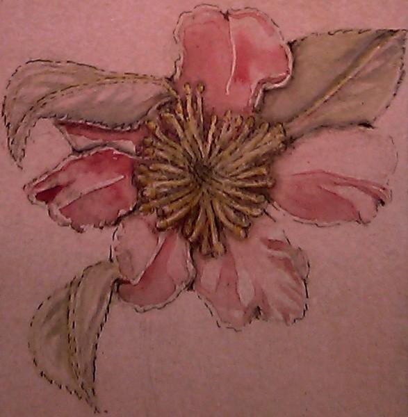 Camellia Japonica Watercolor