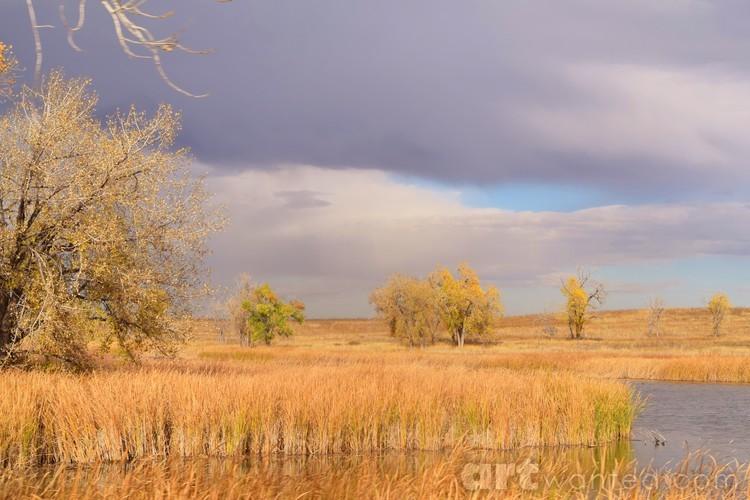 Colorado Blue grey