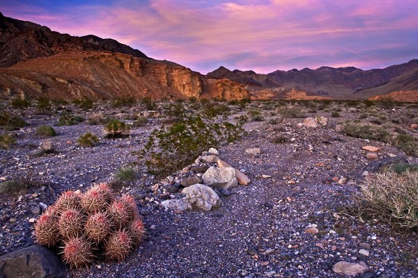 Barrel Cactus and Death Valley Sunset