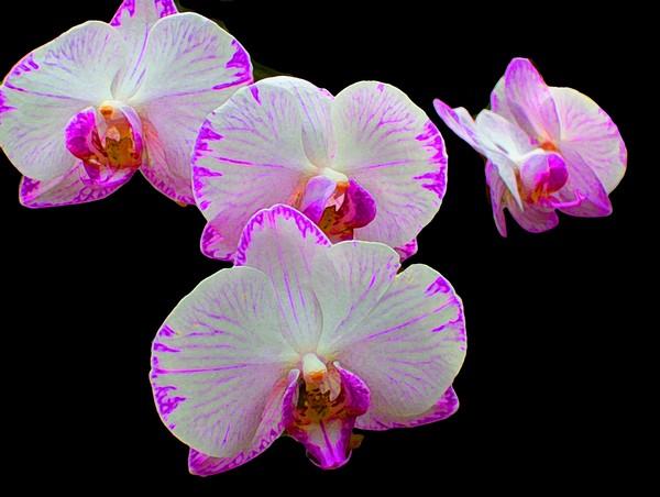 Four orchids