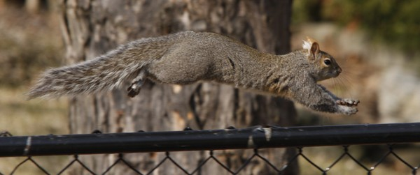 Squirrel in Flight!