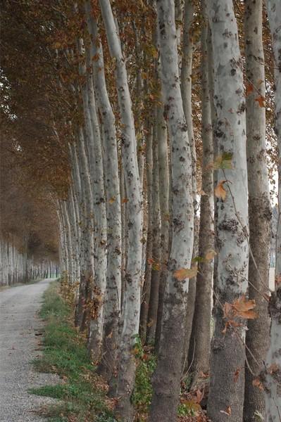 08_TreeFall