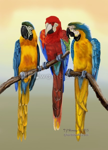 Macaws Hanging Out