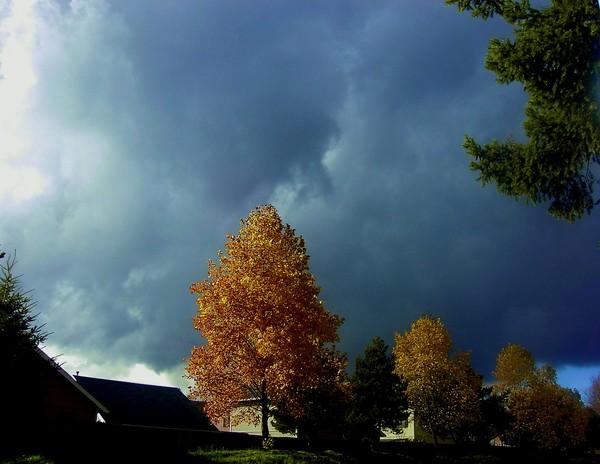 Flaming Shades of Fall