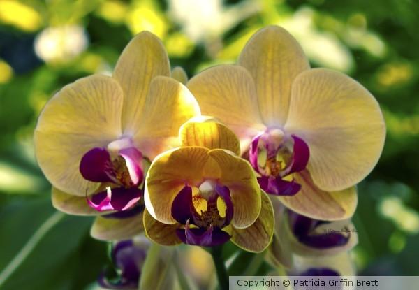 Orchid Study VIII