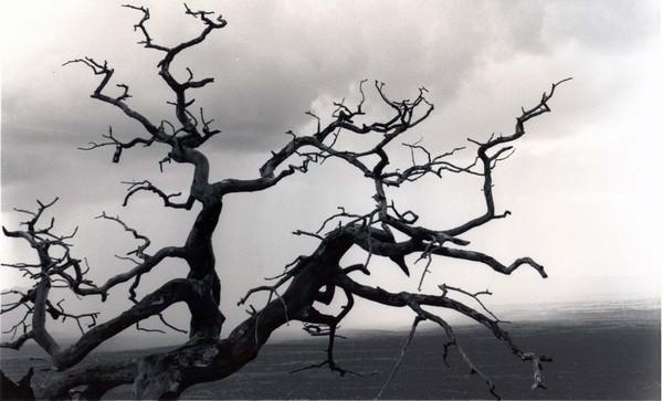mtn tree