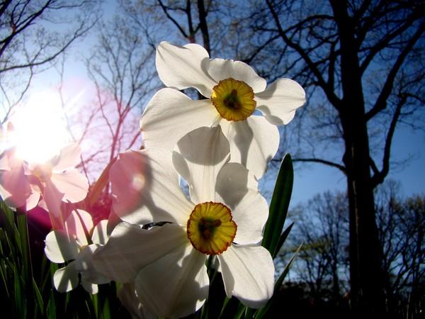 Spring 627a