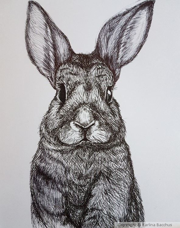 Rabbit Drawing in Ink