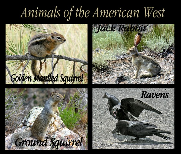 Animals of the American West
