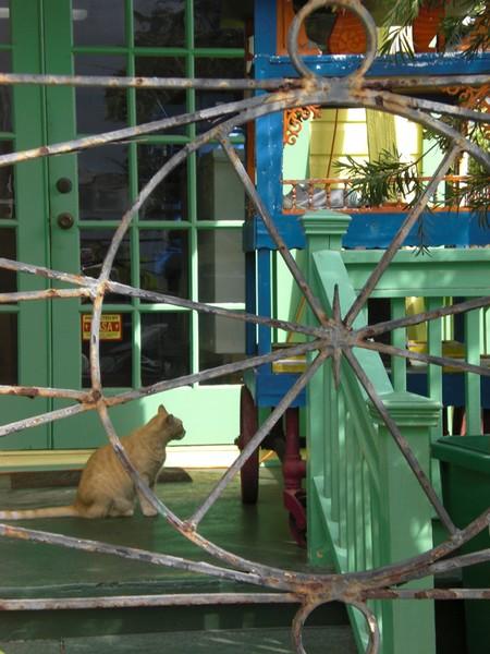 Key West Porch Cat