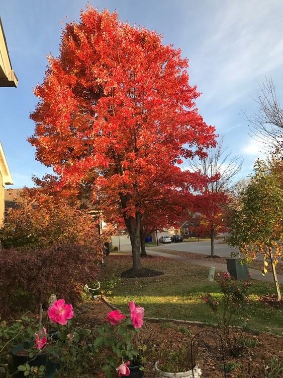 Fall in Lexington