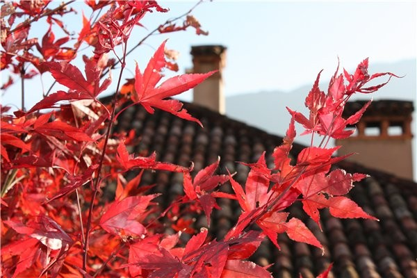 *colors of autumn*