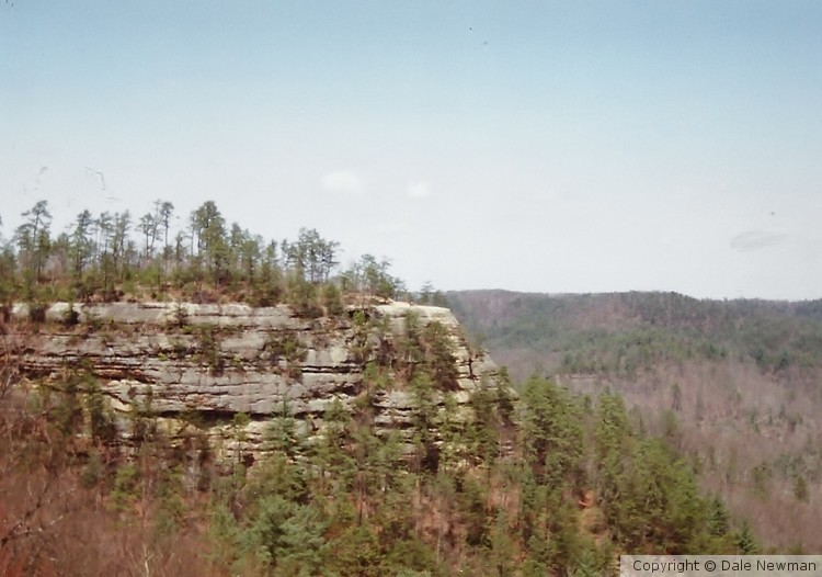 View of Cliff from Natural Bridge, Ky