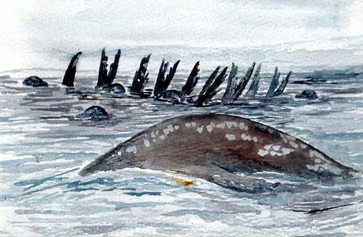 Sea Lion rafting