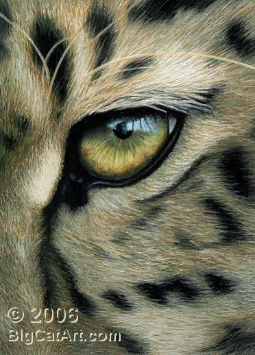 Leopard's Eye