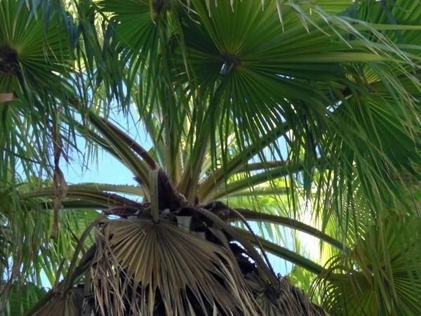 Key West Palms
