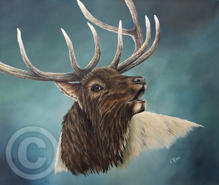 Rocky Mountain Elk)