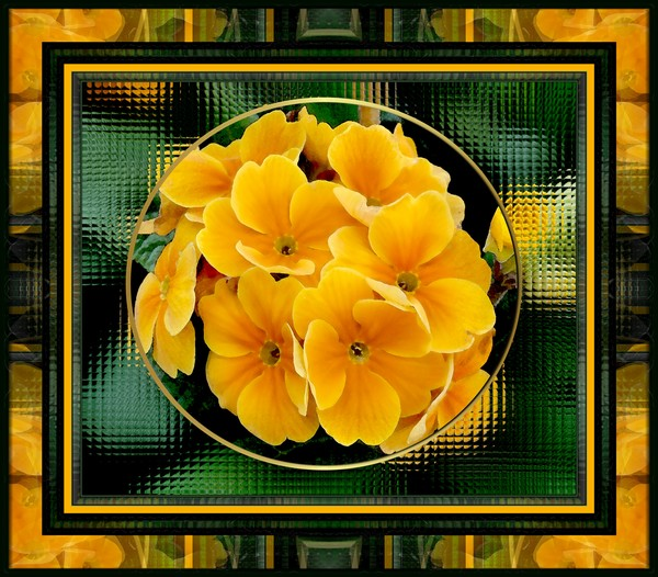 yellow primulas framed