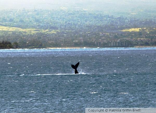 Whale Tail I