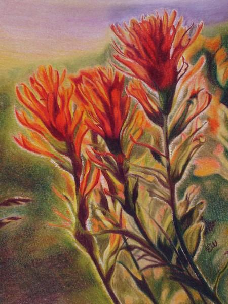 Indian paint brush flower