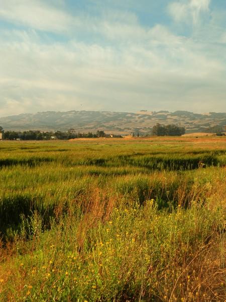 Sonoma Mountains from Ellis Creek environs
