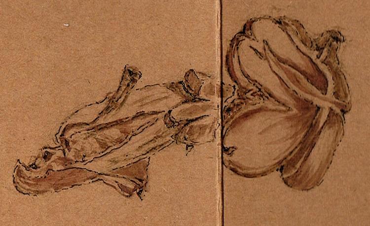 Heart Shaped Mushroom Drawing