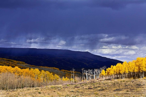 Boulder Mountain Storm and Aspens