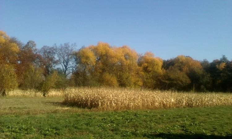 October in my village