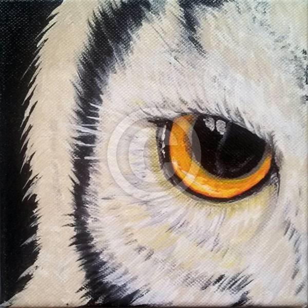 Eye Of The Owl 3
